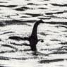네스호 괴물은 '거대한 뱀장어'였다?