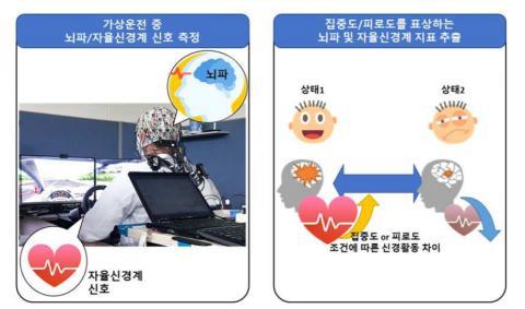 자율신경계 측정을 통해 졸음 예측하는 연구 개요도 ⓒ 손목착용형 센서모듈 측정 생리신호 기반 운전자 집중도/피로도 모니터링 핵심원천기술 개발 최종보고서