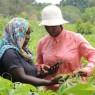 국제열대농업연구소와 플랜트빌리지가 공동으로 개발한 '누루'는 휴대폰으로 작물을 촬영하기만 하면 질병 감염 여부를 실시간으로 진단해준다.