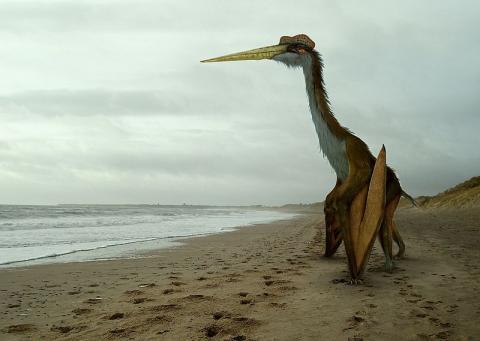 새로운 화석 발견 및 수학적 모델링과 결합된 새로운 해부학적 연구 방법 등으로 익룡에 대한 미스터리가 차츰 벗겨지고 있다. © Wikimedia(Johnson Mortimer)