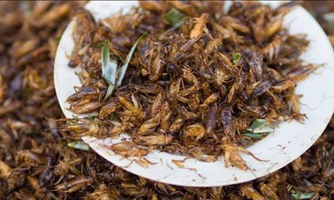 귀뚜라미는 미래의 화성 식용 곤충 산업에서 큰 비중을 차지할 전망이다. © Wikipedia