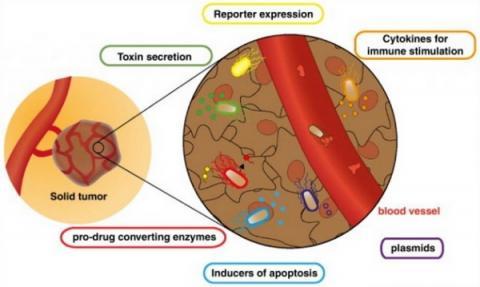 균독주는 암치료에도 활발히 적용되고 있다 ⓒ mappingignorance.org
