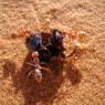 가장 빠른 동물은 '사하라 은색 개미'