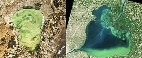 러시아와 중국 국경에 있는 칸카(Khanka) 호(왼쪽)와 미국과 캐나다 국경에 있는 세인트 클레어(St. Clair) 호수(오른쪽)는 이번 연구에서 모두 개선된 모습이었으나 이후 녹조 현상이 악화됐다.  CREDIT: Khanka image made by Norman Kuring, NASA's Ocean Color web, and Lauren Dauphin. St. Clair image courtesy of NASA Earth Observatory made by Joshua Stevens, using Landsat data from the U.S. Geological Survey