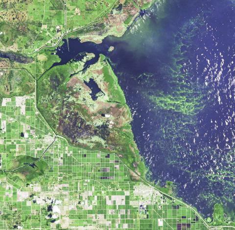 미국 플로리다주 남부의 오키초비(Okeechobee) 호수에서 녹조 현상이 악화된 모습. 독성 조류 발생으로 플로리다 주는 2016년과 2018년에 비상사태를 선포했다.  CREDIT: NASA Earth Observatory image made by Joshua Stevens, using Landsat data from the U.S. Geological Survey.