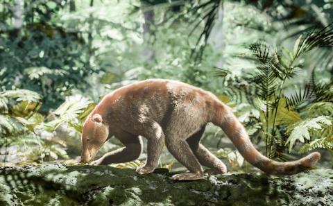 고대 포유류인 록소로푸스(Loxolophus)를 컴퓨터 그래픽으로 재현한 그림. 소행성 충돌 후 30만년이 지난 뒤 우거진 종려나무 숲에서 먹이를 찾고 있다.   Credit: HHMI Tangled Bank Studios