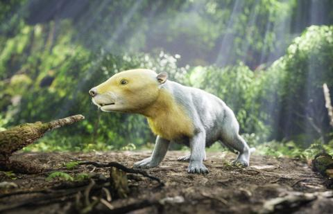 고대 포유류의 한 종인 타에니오라비스(Taeniolabis)를 컴퓨터 그래픽으로 재현한 모습.   Credit: HHMI Tangled Bank Studios