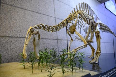 지질박물관에 전시된 데이노케이루스 골격 모형 ⓒ 한국지질자원연구원