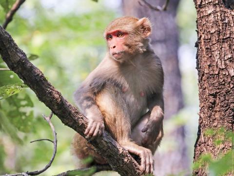 사람들은 고통을 결코 잊지 않는다. 히말라야 원숭이를 대상으로 한 새로운 연구에 따르면 우리의 DNA조차도 괴롭힘을 당한 '분자 기억'을 가지고 있는 것으로 나타났다.  Credit: Duke Today