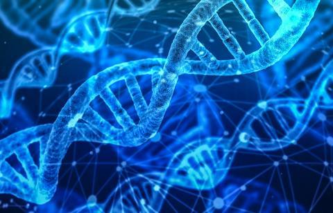 이번 연구에 따르면 사회적 학대나 스트레스는 유전자에 반영돼 성인이 되어서도 '생물학적 각인'으로 작동할 수 있다.  Credit: Pixabay