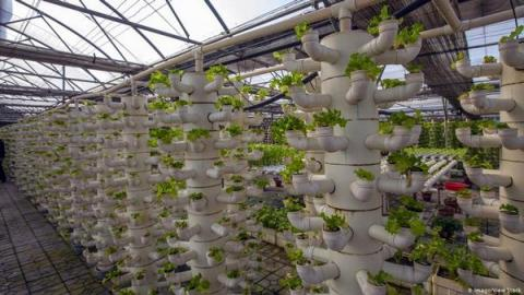 네덜란드는 좁은 국토 면적에도 불구하고 스마트팜으로 세계 농업 시장에서 독보적 위치를 자랑하고 있다 ⓒ dw.com