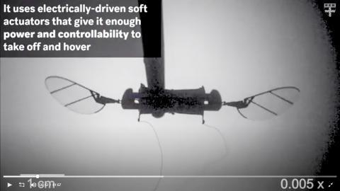 이번에 개발된 마이크로 비행 로봇 '로보비'는 탄력 있는 연성 구동기를 채용해 벽에 부딪히거나 다른 로보비와 충돌해도 손상을 받지 않는 장점이 있다.  동영상 캡처. CREDIT: Harvard SEAS