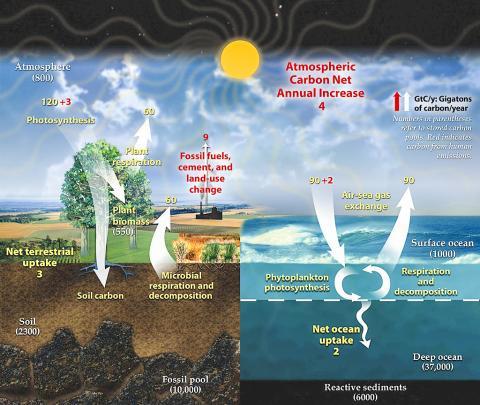 탄소는 기후 시스템 구성요소들 사이에서 지속적으로 옮겨진다. 생물체에 의해 고정되고 바다와 대기를 통해 운반된다. 탄소는 대표적 온실가스로 과도한 온실가스들은 지구 기온을 높여 생태계를 교란시킨다.  CREDIT: Wikimedia / US Government