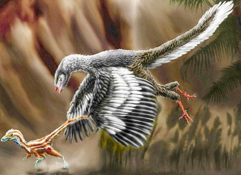 후기 쥐라기 때 독일 지역에 살았던 시조새(Archaeopteryx lithographica)가 작은 공룡(compsognathid)을 쫓는 모습을 그린 상상화.  CREDIT: Wikimedia / Durbed