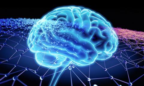 최근 뇌과학자들은 부모로부터 물려받은 유전정보와 교육 등의 환경적 요인이 밀접하게 서로 영향력을 주고받으며 읽고쓰기 능력이 가변적으로 형성되고 있다는 사실을 밝혀내고 있다. ⓒ World Federation of Neurology