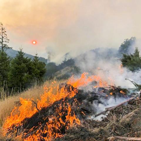 산불 현장 모습. 기후변화에 따른 건조 현상으로 지구촌 곳곳에서 산불도 잦아졌다. 산불은 생태계를 파괴하고 온실가스를 대가 중에 대량 방출한다.  CREDIT: Forest Service photo by Gaule/Jones