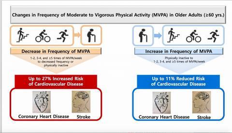 60세 이상 노년층에서 신체 활동과 심혈관 질환 위험 사이의 연관성을 나타낸 그림.  CREDIT: European Heart Journal
