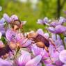 백악기 '재주넘기 꽃 딱정벌레'와 삼구형 속씨 식물의 모습을 그린 상상도.