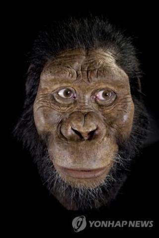 루시보다 앞선 380만년 전 오스트랄로피테쿠스 아나멘시스 두개골로 복원한 얼굴 ⓒ AP=연합뉴스