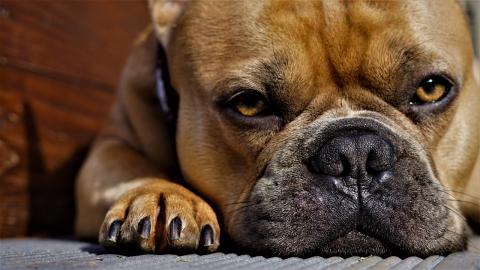 개 나이를 인간 나이로 환산하는 공식이 나왔다. ⓒ 픽사베이