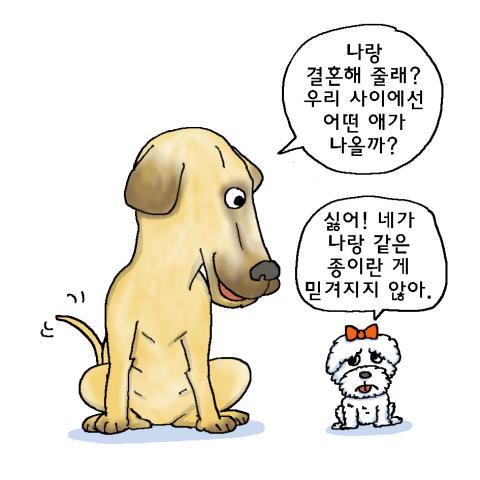 개는 인간에 의한 품종 개량으로 약 400여 종이 넘는 다양한 형태의 품종이 생겼다.ⓒ윤상석