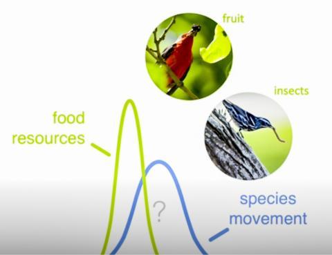식물의 씨나 과일 및 곤충이 가장 풍부한 때(녹색 선)는 이전보다 더 일찍 나타나 새들이 자신들의 최대 먹이 가용성과 이주 타이밍을 맞출 수 있을지 의문이 제기된다.  CREDIT: Kyle Horton/Colorado State University
