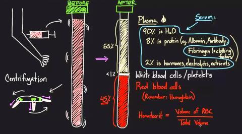 혈액의 구성 성분. 이번 연구에서는 1만7000명으로부터 채취한 혈장 속 단백질 5000개를 분석했다.  Credit: Wikimedia