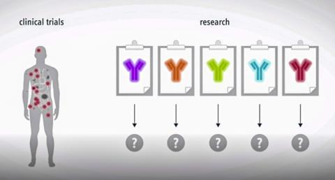 전신에 퍼진 전이암을 정확히 치료하기 위해서는 후보 약의 임상시험을 실시해 약효를 검증하는 것이 바람직하다.   ©Helmholtz Zentrum München