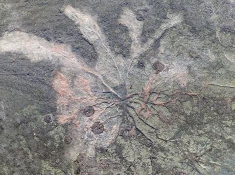 뉴욕 주 카이로 타운에서 발견한 화석 산림의 모습. 3억8600만 년 전에 있었던 지금까지 발견된 최초의 화석산림으로 지구 생명체 연구에 큰 도움을 줄 것으로 예상되고 있다. ⓒWilliam Stein / Christopher Berry