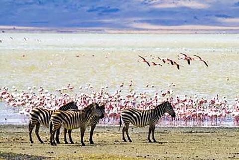 화산암 상에 만들어진 탄산염이 풍부한 케냐의 마가디 호수. 이 호수의 짠 물에는 미생물이 풍부해 플라멩고를 포함한 다른 많은 상위 생명체들을 끌어들인다.  CREDIT: Stig Nygaard/Flickr
