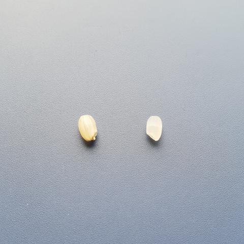 현미와 백미. 자세히 보면 쌀(씨)눈도 안 보인다.  ⓒ 박지욱