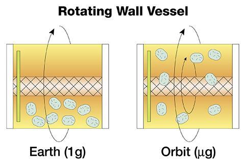 RWV는 미세중력 환경을 재현하여 세포 배양을 할 수 있다. © NASA