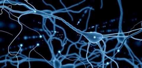 영국 바스 대학 연구팀이 사람의 신경 기능을 모방해 인공신경을 만들어내는데 성공했다. 생체공학적으로 설계된 이 인공신경은 인체 내 손상된 신경을 대체할 수 있어 새로운 치료법으로 주목받고 있다. ⓒneurocirugiachile.org