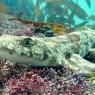 4억 년 만에 위기 맞이한 상어