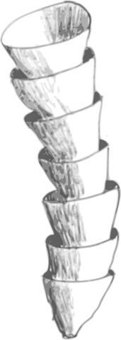 클라우디나 화석을 보고 실물을 추상화한 그림. CREDIT: Wikimedia