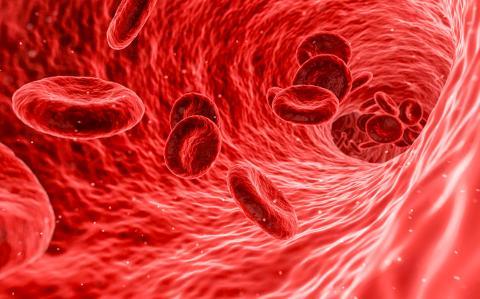 이번 연구에서는 모유의 항체가 장으로부터 혈류로 운반됨으로써 더욱 광범위하고 체계적인 면역 보호를 보장하는 것으로 확인됐다. 혈류 속에 혈구가 흐르는 그림.  Credit: Pixabay / Arek Socha